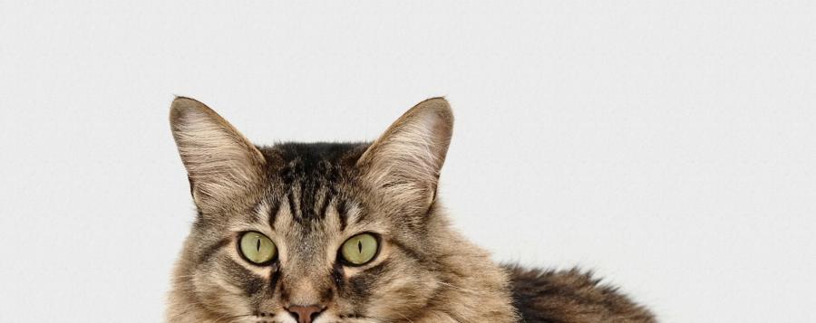 Header-Bild: Katze