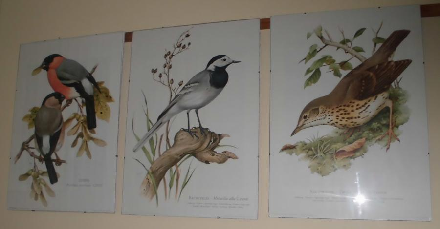 Vogelgallerie