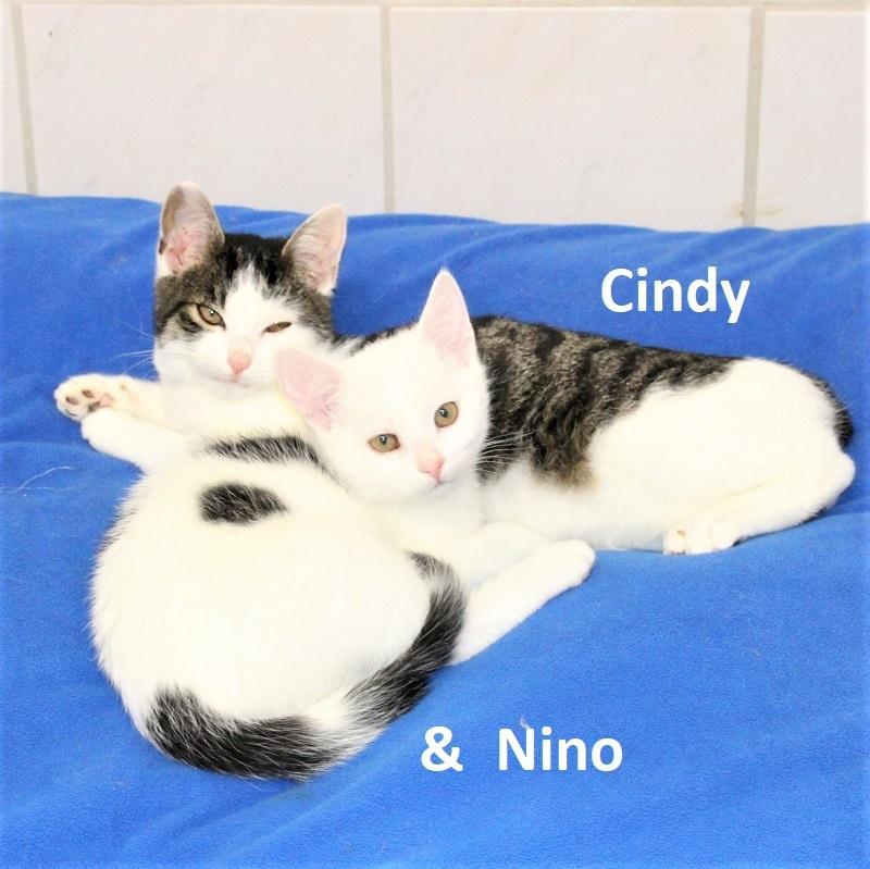 Cindy & Nino