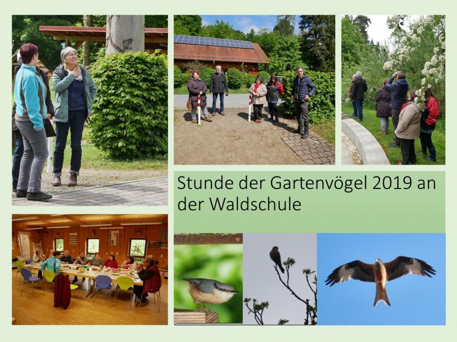 Stunde der Gartenvögel 2019