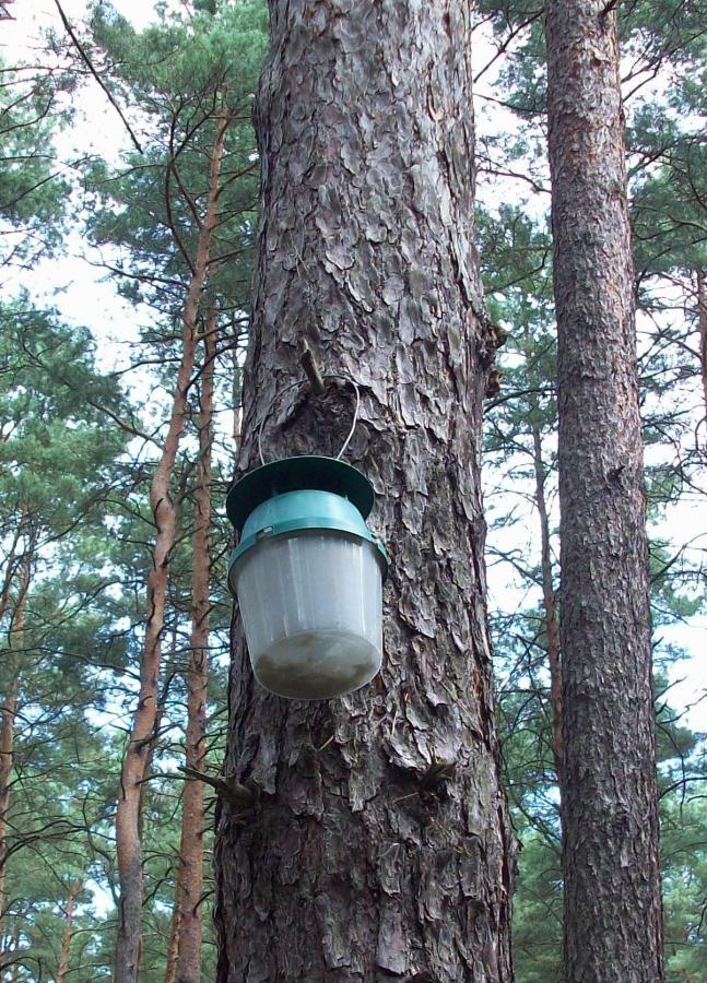 Aktiver Forstschutz mit Falterfalle