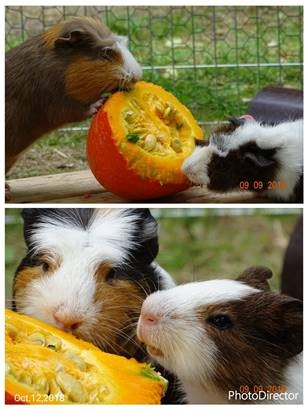 Pumba & Timon