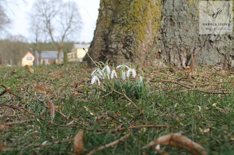 Frühling in Boldela