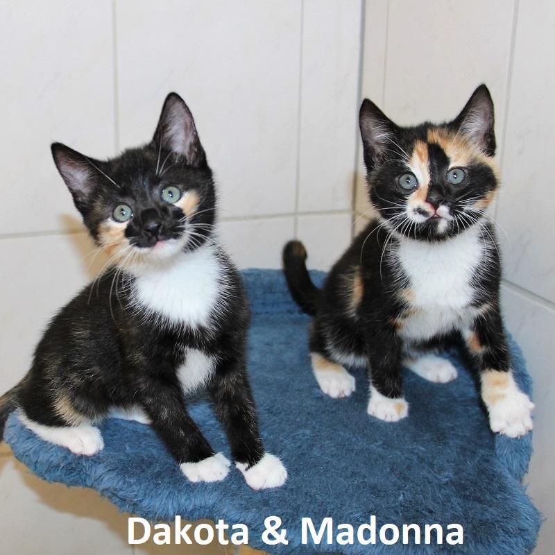 Dakota & Madonna