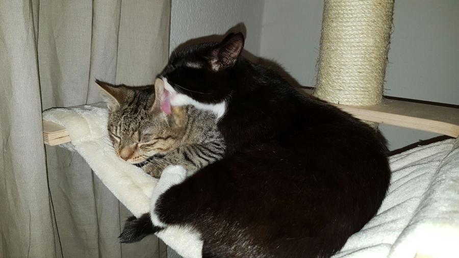 Danyal und Bella
