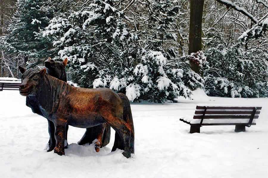 Winter im Park_Katja Schreiber
