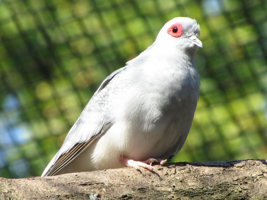 Vogelvoliere 14