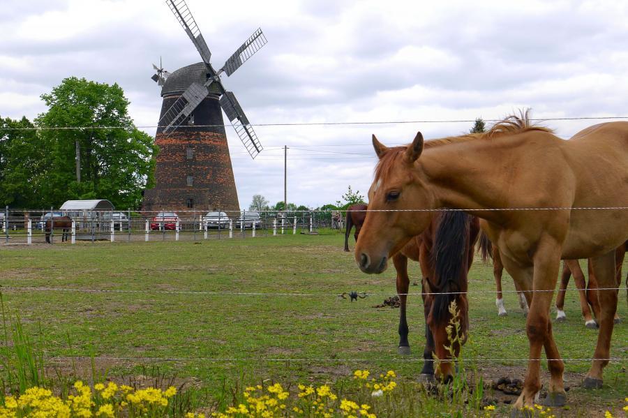 Mühle und Pferdezucht in Dörrwalde