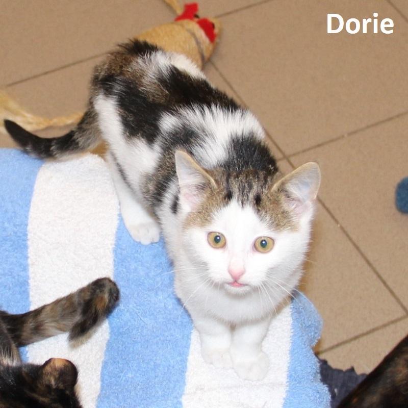 Dorie