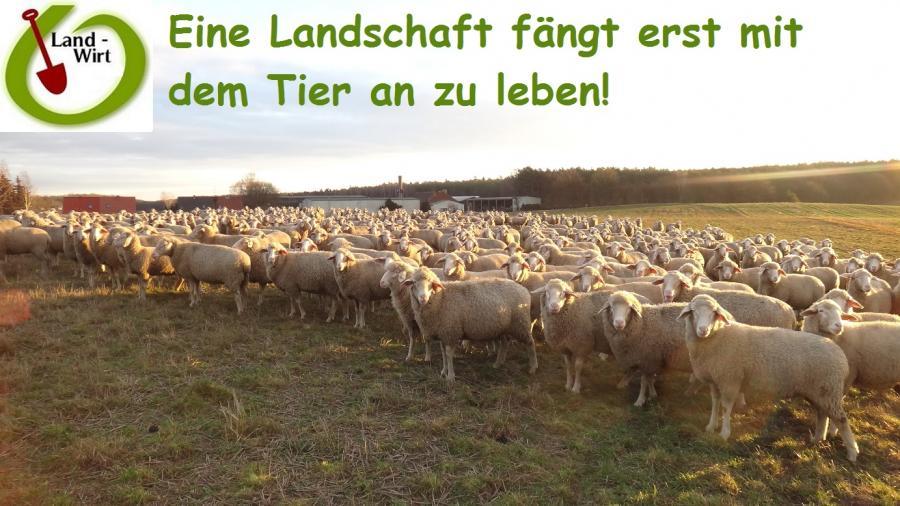 Optimaler Weidegang fördert Wurzeln und Bodenbiologie!