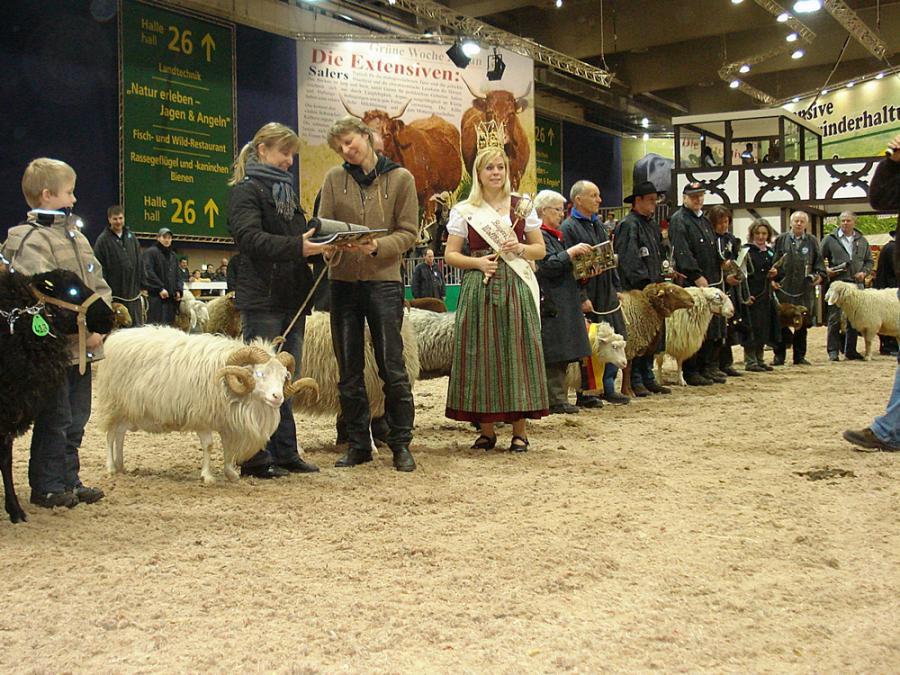 Skudde als Wollsieger Bundesschau Landschafe IGW 2010