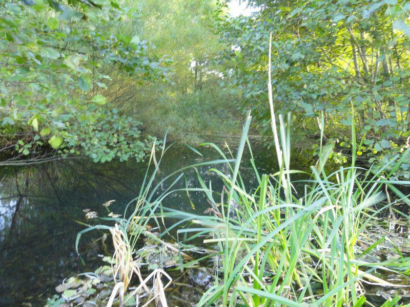Biotop in der Groß Brebler Feldmar im Sommer