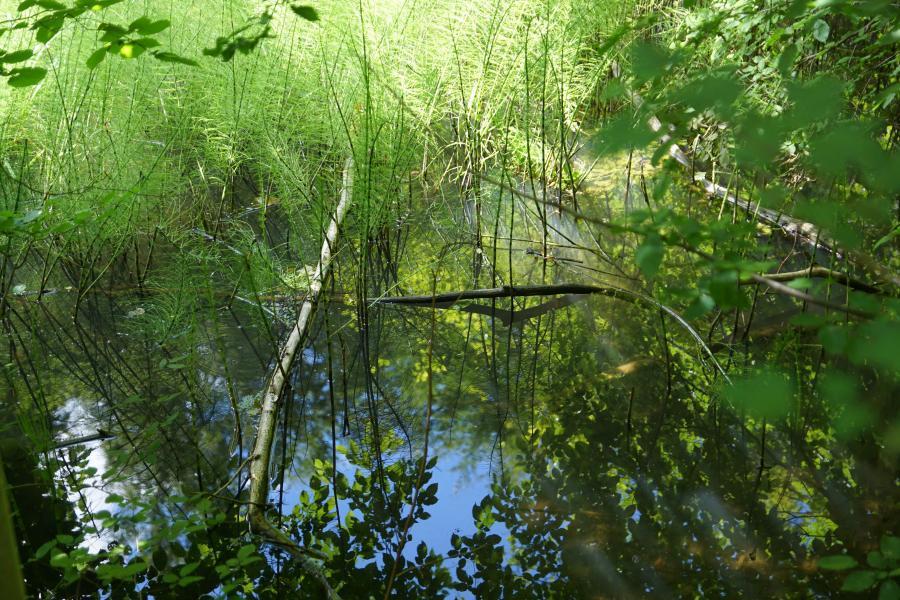 Teich am Klosterweg bei Wernigerode