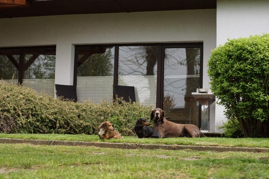 Hundne