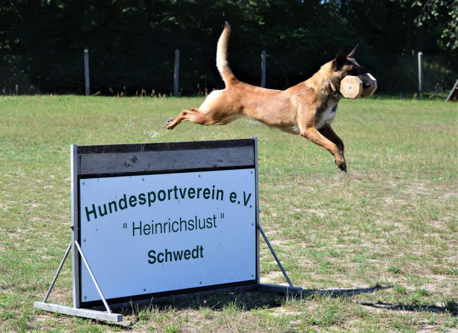 HSV Schwedt