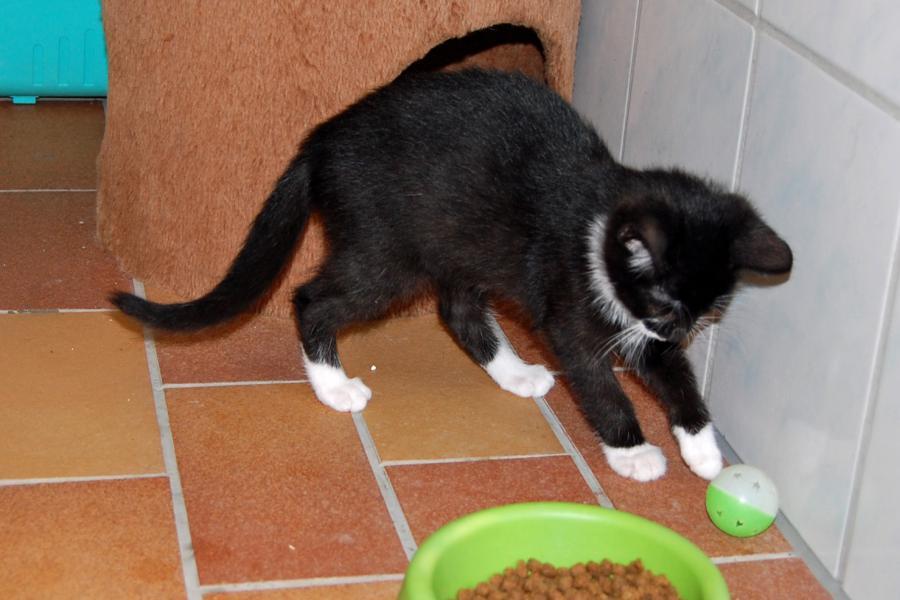 Tierschutzverein Niederbarnim E V Viele Kleine Babykatzen