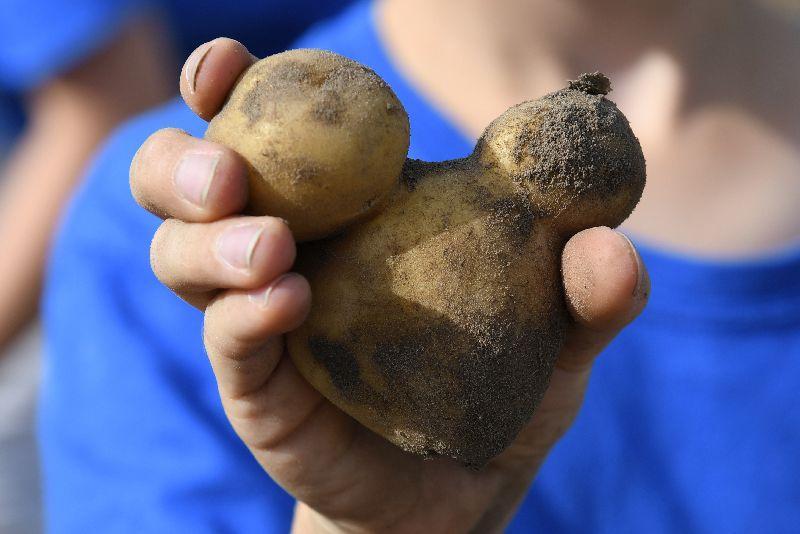 Kartoffel_Mickey_Maus