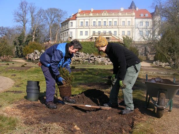 Doreen Hannemann (links) und Ingrid Weinholz pflanzen die kleinen Kugelfichten.
