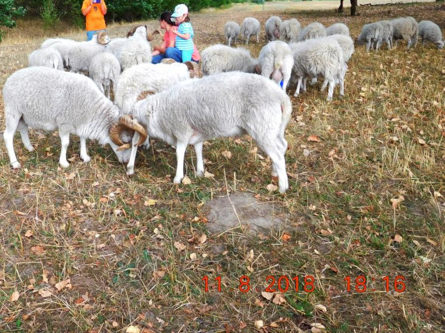 Schaf & Weide grau