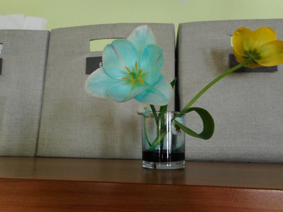 Blumen färben