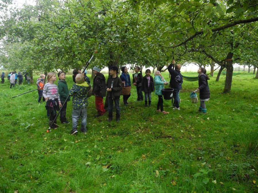 Apfelgarten 3