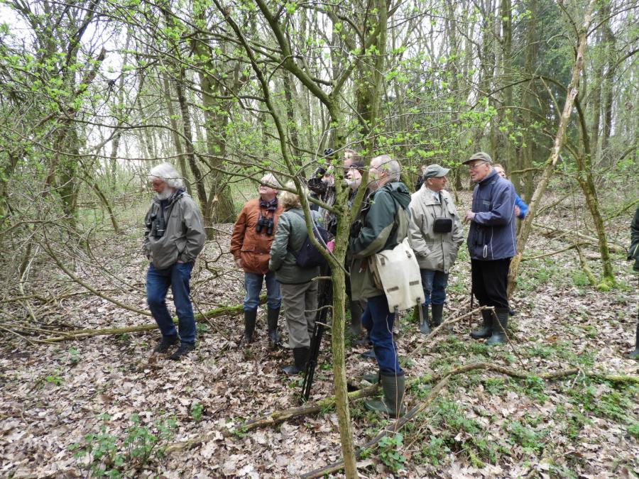 Beobachtergruppe im Waldgebiet Hundertacker. Foto: I. Lilienthal (15.04.2018)