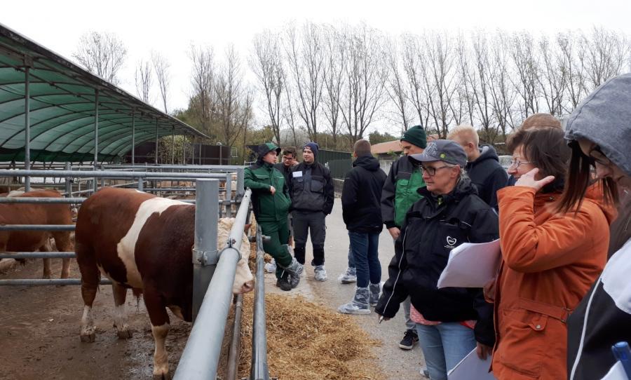 Lehrunterweisung Rindermast