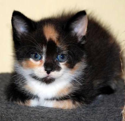 Kitten lilly