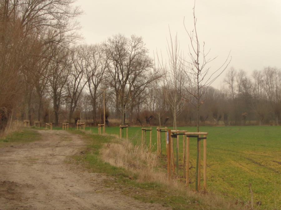 Baumpflanzung_Großneuhausen