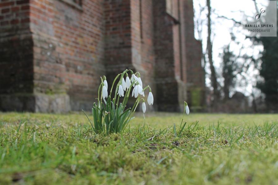 Frühling an der Kirche in Sülte