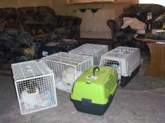 Katzen Grimmen
