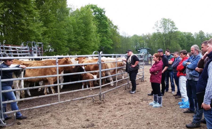 Praktische Übungen zum sicheren Umgang mit Rindern