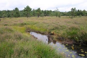Lehmanns Teich mit aufsteigendem Wasserstand