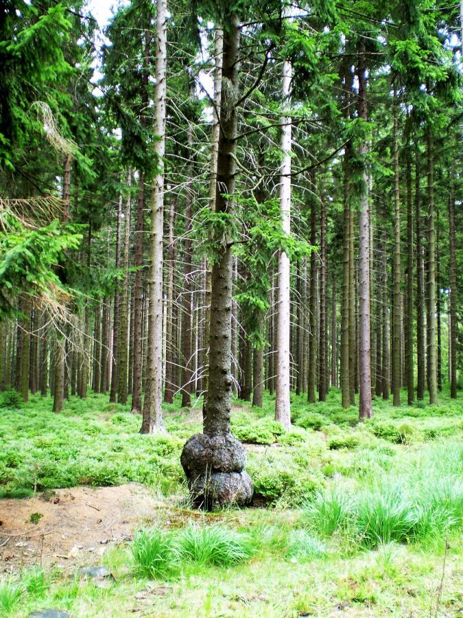 Einzigartiger Baum (by Barbara Ludwig)