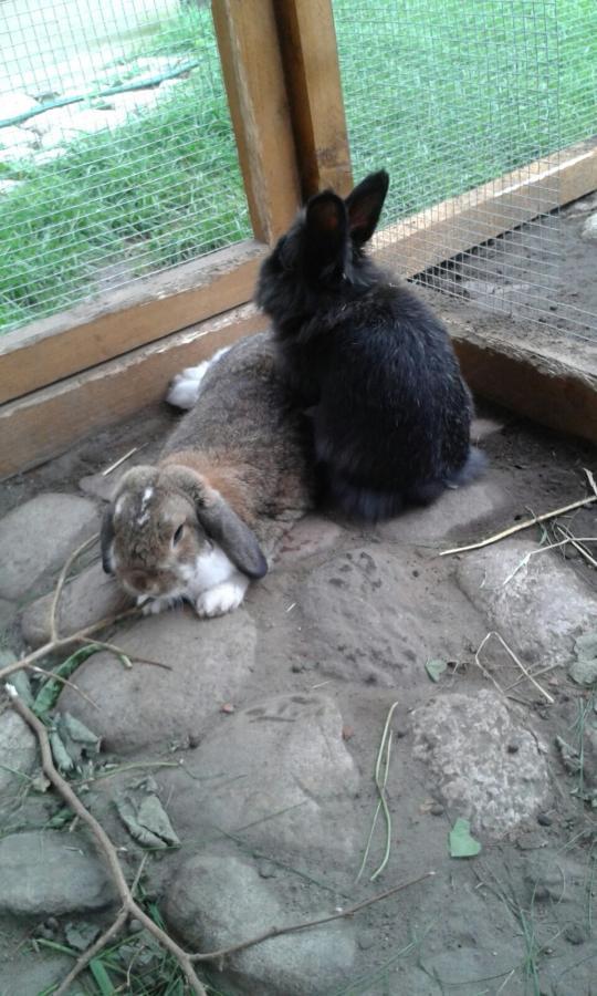 Blacky und Elli