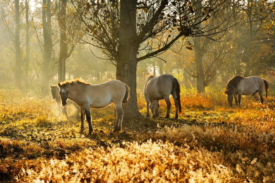 Pferde in Hobrechtsfelde