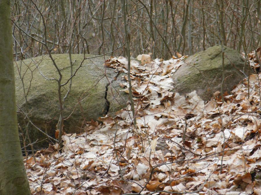 Steine im Grumsin