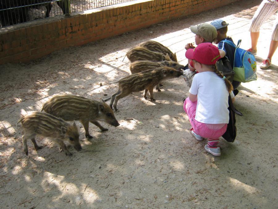 Kinder mit Frischlingen