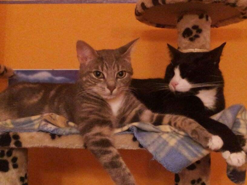 Charlie und Lucy