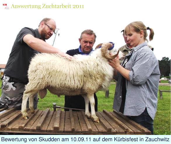 Körung Skudden Bock 2011