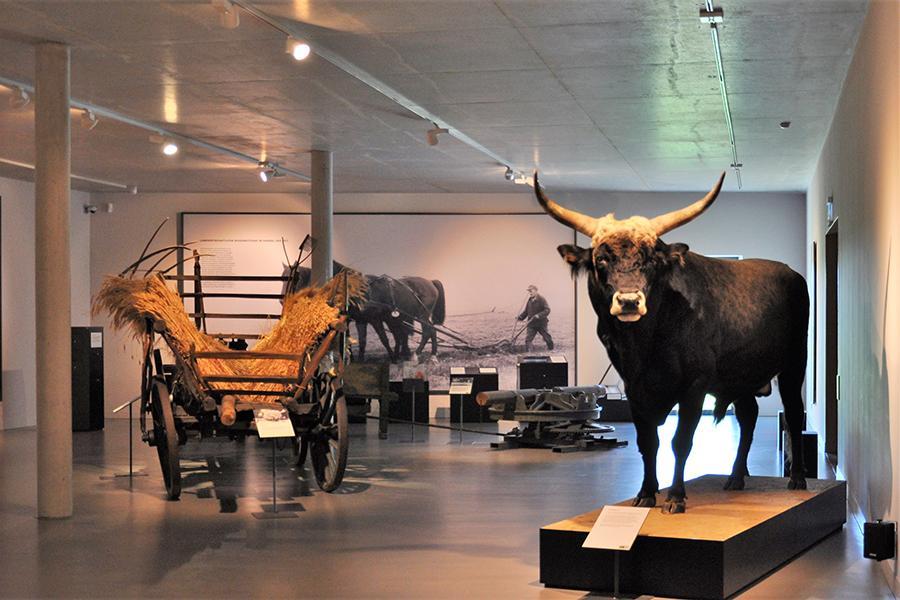 Barnim Panorama_Ausstellung_Foto: Heise