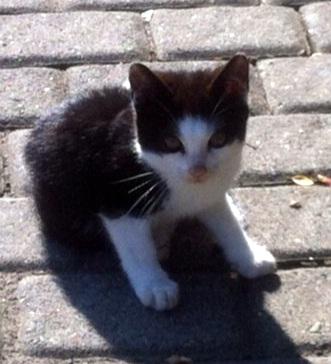 Kitten Potsdam
