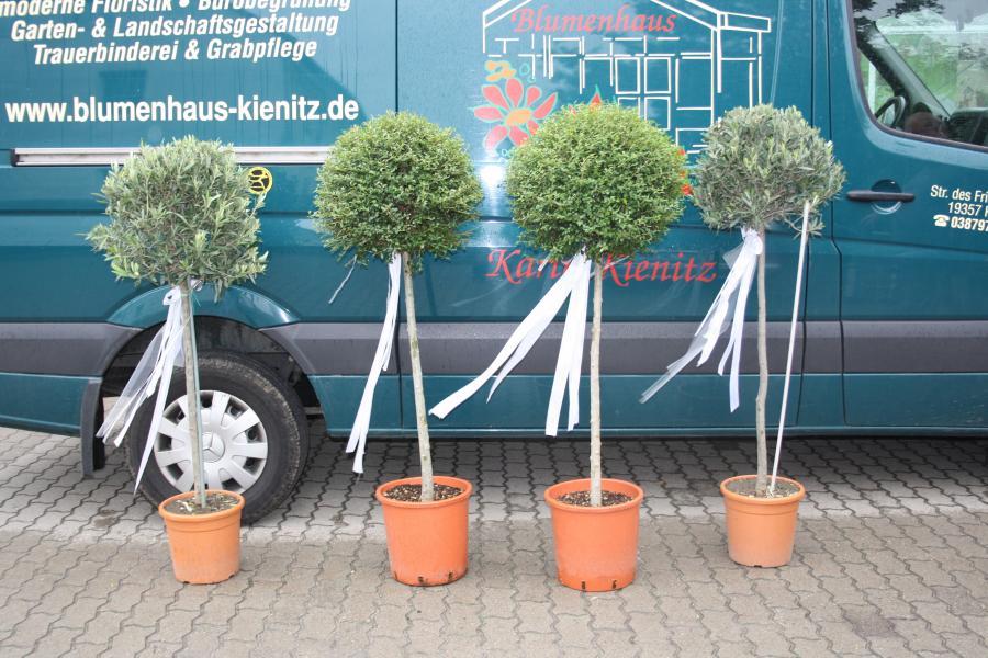 Leihbäume