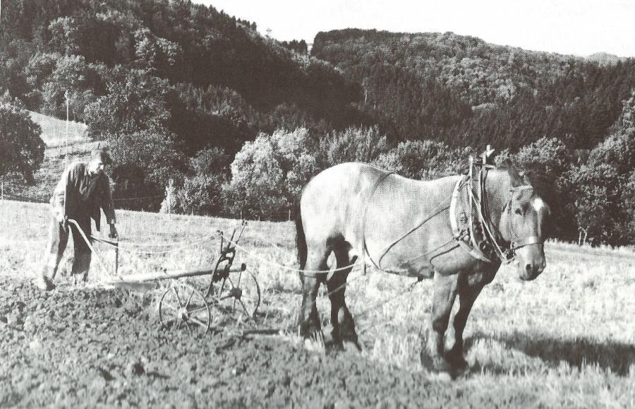 Feldarbeit 1960