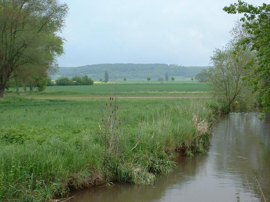 Feuchtgrünland in der Leineaue