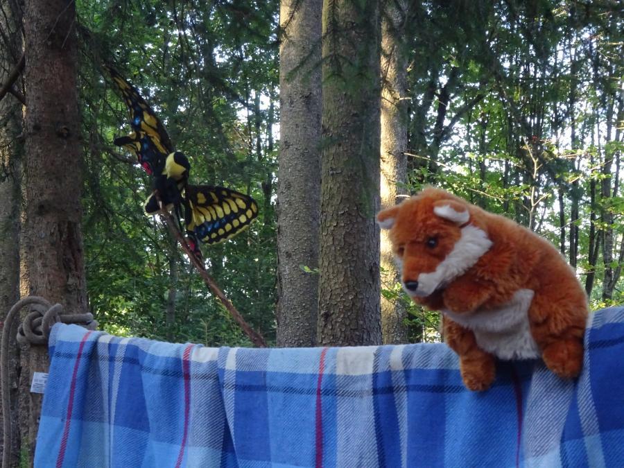 Schmetterling Fuchs