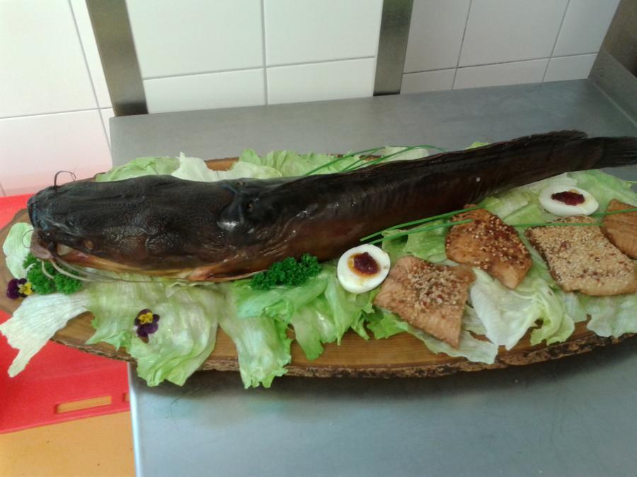 Fischplatten (6)-ganzer Wels