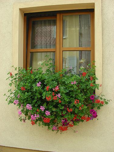 Florale Fenstergestaltung in Liebenwalde