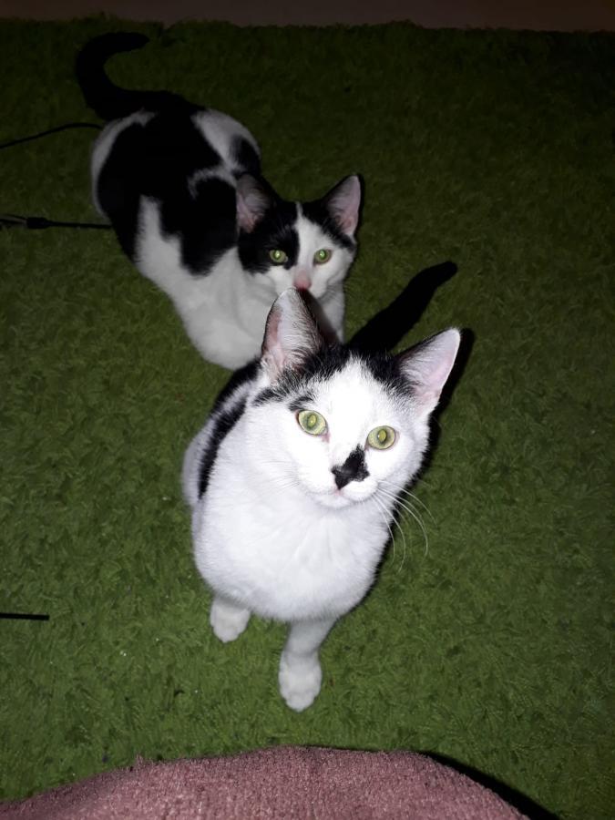 Flynn und Fabio