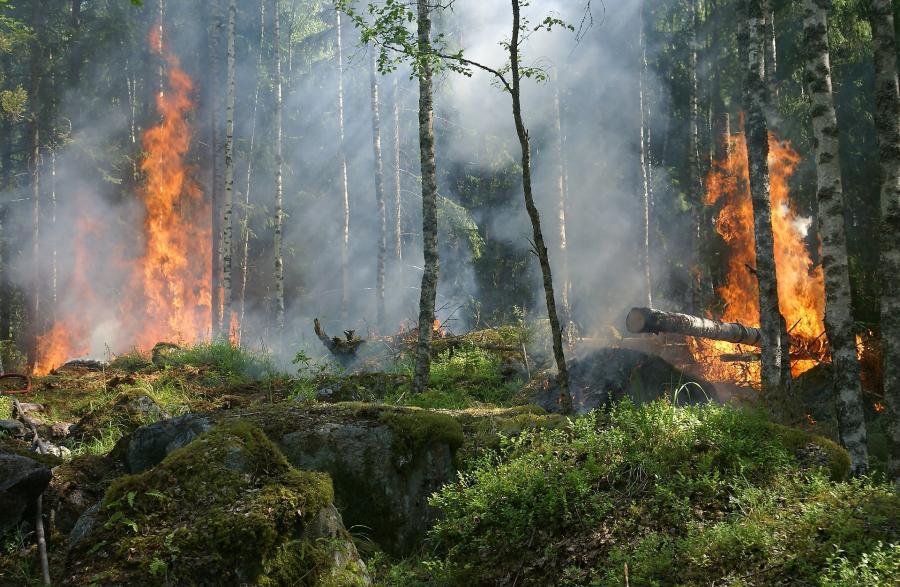 Schutz vor Waldbränden